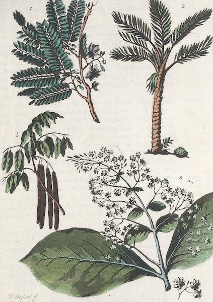 Le Costume Ancien et Moderne [Asie] Vol. 2 - Vegetaux (1817)