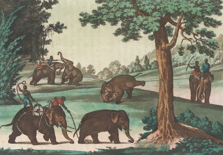 Le Costume Ancien et Moderne [Asie] Vol. 2 - Chasse des elephans (1817)