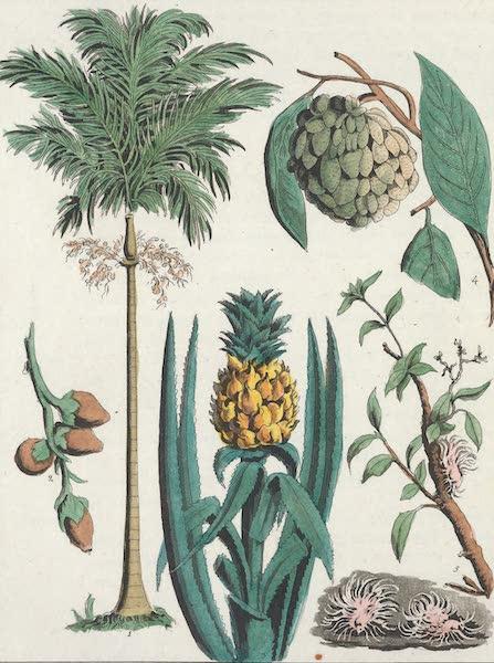 Le Costume Ancien et Moderne [Asie] Vol. 2 - Grand Chancelier, Mandarins, Lettres, etc (1817)
