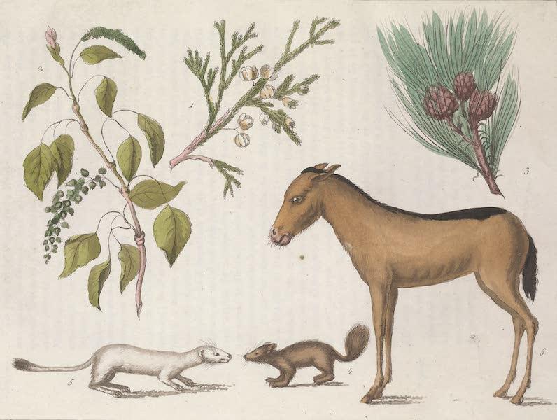 Le Costume Ancien et Moderne [Asie] Vol. 4 - Vegetaux, animaux (1818)