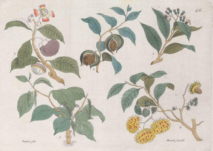 Le Costume Ancien et Moderne [Asie] Vol. 4 - Vegetaux (1818)