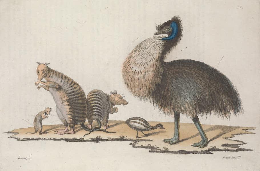 Le Costume Ancien et Moderne [Asie] Vol. 4 - Animaux de la Nouvelle Hollande (1818)