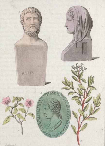 Le Costume Ancien et Moderne [Europe] Vol. 1, Pt. 1 - VII. Vegetaux et animaux [I] (1817)