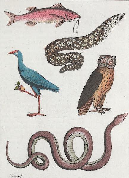 Le Costume Ancien et Moderne [Europe] Vol. 1, Pt. 1 - VIII. Vegetaux et animaux [II] (1817)