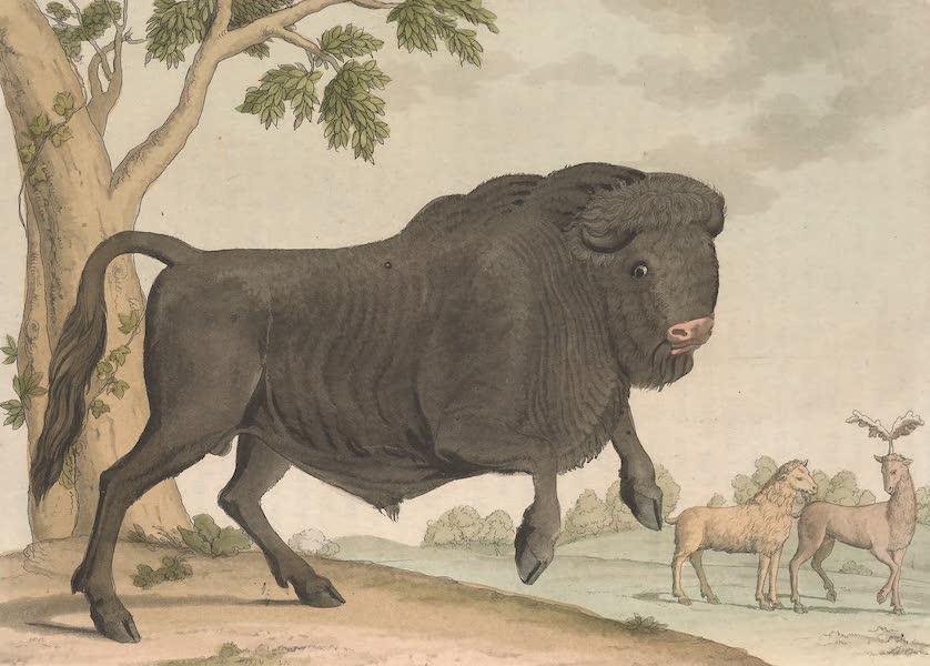Le Costume Ancien et Moderne [Europe] Vol. 4 - LII. Figure de l'Ure, prise du Cesar de Thompson (1824)