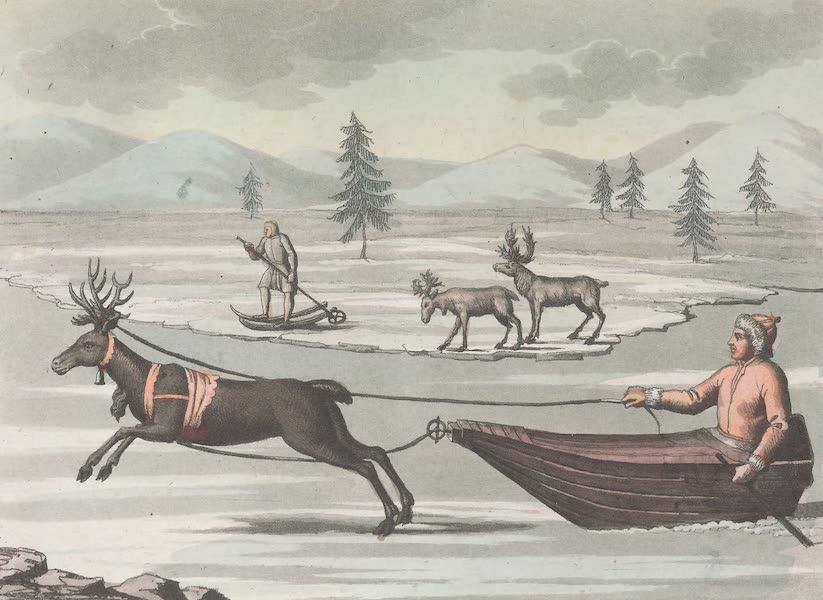 XLIII. Rennes, male et femmelle. Lapon dans sa slite trainee par un renne