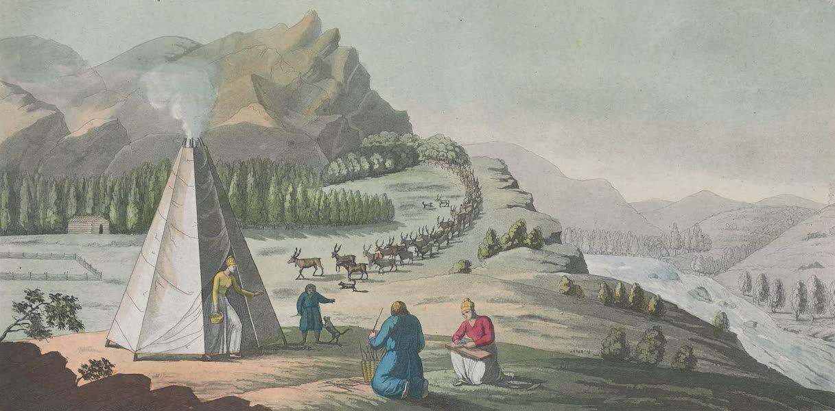 XLVII. Hutte ou tente octogone des Lapons, avec des troupes de rennes descendant de la montagne