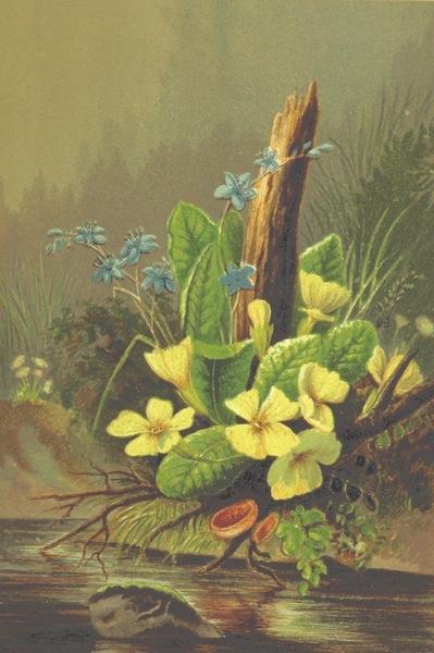 Life Chords - Primroses (1888)