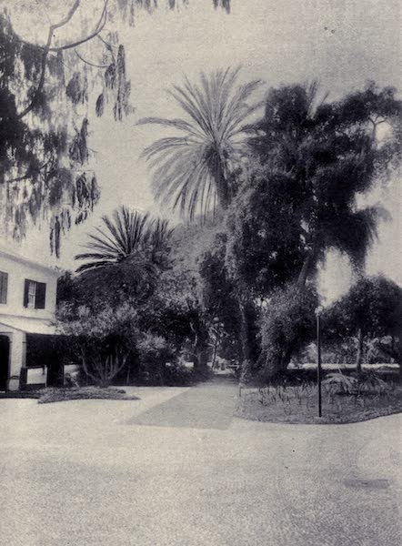 Madeira : Old and New - A Corner at the Casino Gardens (1909)