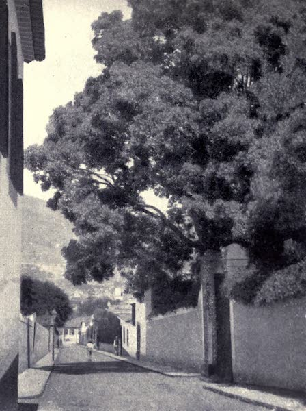 Madeira : Old and New - Road Leading to Casino (1909)
