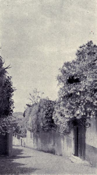 Madeira : Old and New - Datura and Bougainvillea : Monte Road (1909)