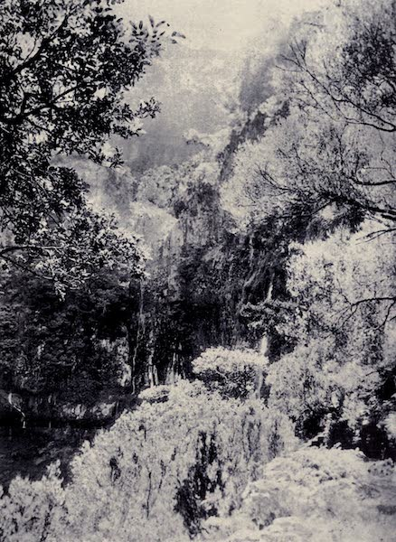 Madeira : Old and New - The Levada at Rabagal (1909)