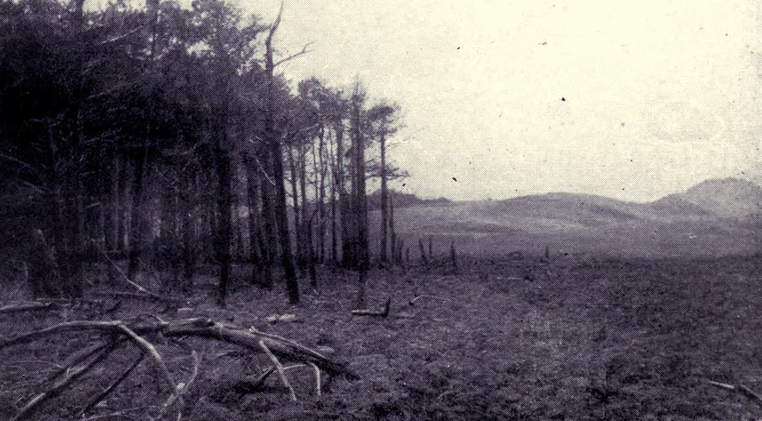 Madeira : Old and New - The Desertas : The Pine Copse (1909)