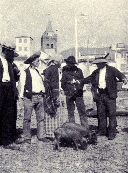 Madeira : Old and New - The Pig Market (1909)