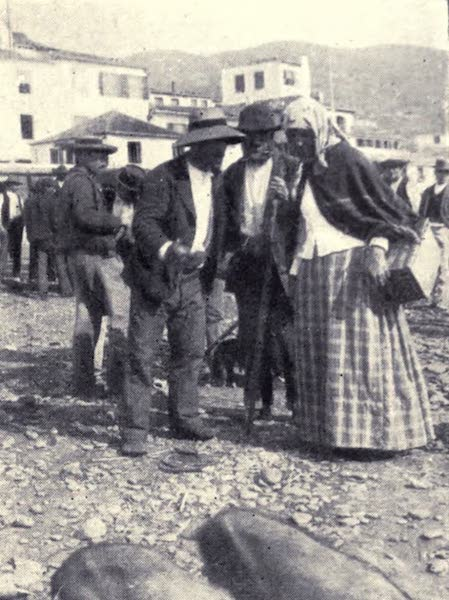 Madeira : Old and New - The Pig Market : A Discussion on porcine Merits (1909)