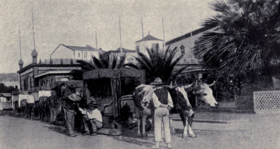Madeira : Old and New - A Carro Stand : Funchal (1909)