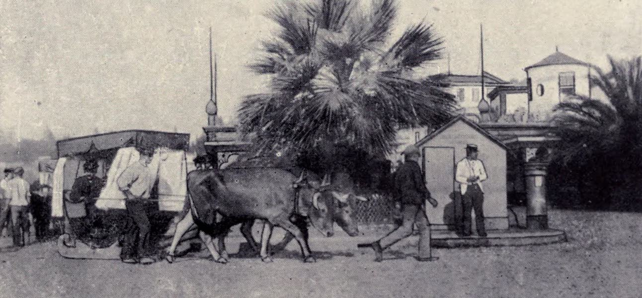 Madeira : Old and New - An Ox Carro : Funchal (1909)