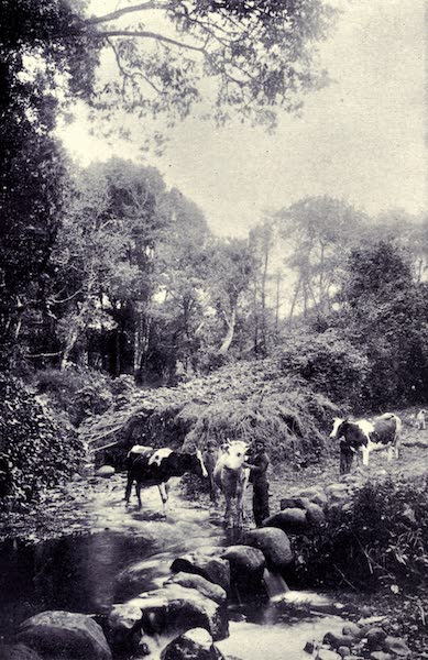 Madeira : Old and New - A Scene on the Road to Machico (1909)