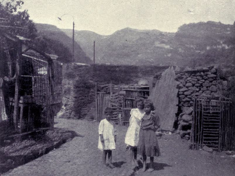 Madeira : Old and New - A Cottage Enclosure (1909)