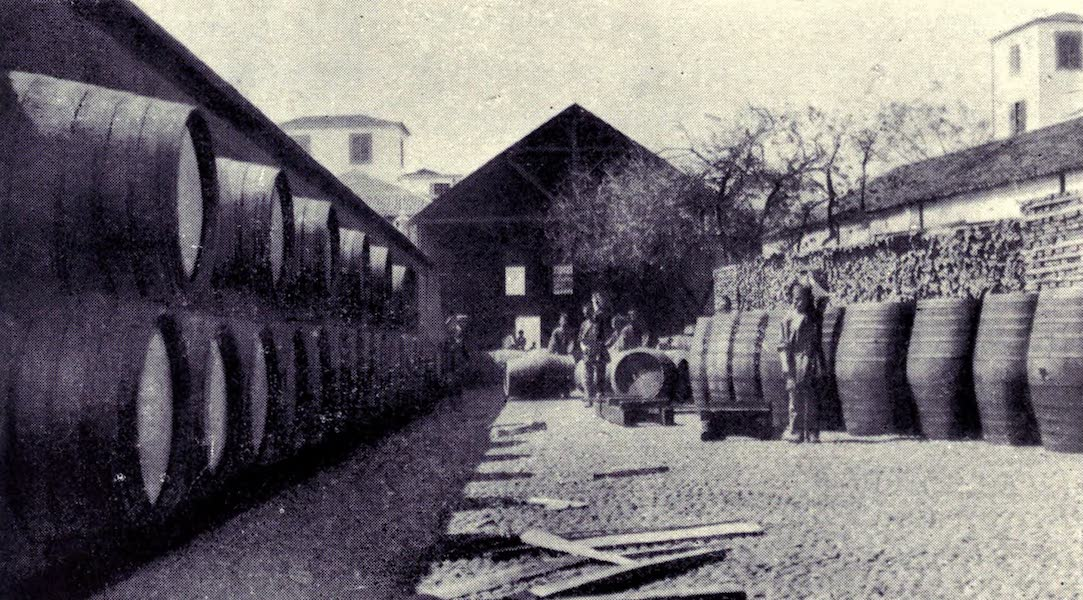 Madeira : Old and New - Wine Shipper's Yard : Funchal (1909)