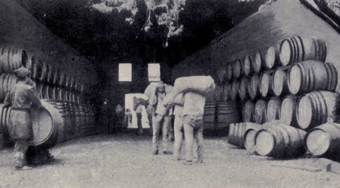 "Madeira : Old and New - ""Borachos,"" or Wine Skins (1909)"