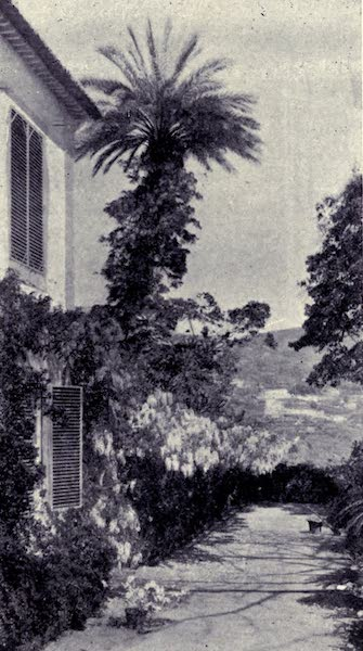 Madeira : Old and New - Palm Tree and Wistaria : Quina da Levada (1909)