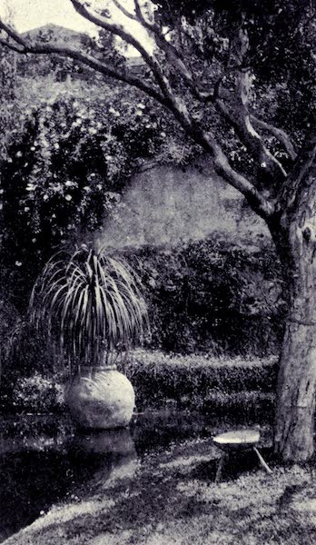 Madeira : Old and New - In a Madeira Garden (1909)
