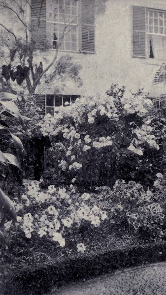 Madeira : Old and New - A Bright Garden Corner (1909)