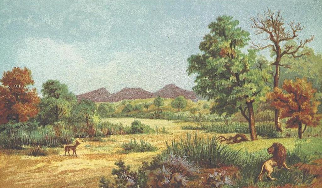 Matabele Land and the Victoria Falls - Dry Bed of the Inkwesi River (1881)