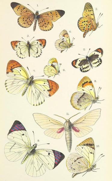 Matabele Land and the Victoria Falls - [Butterflies - II] (1881)