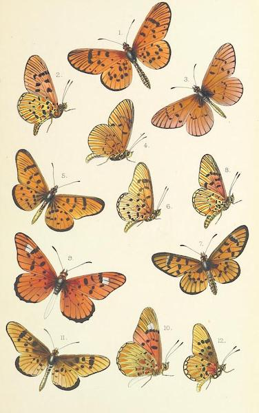Matabele Land and the Victoria Falls - [Butterflies - I] (1881)