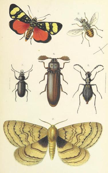 Matabele Land and the Victoria Falls - [Insects] (1881)
