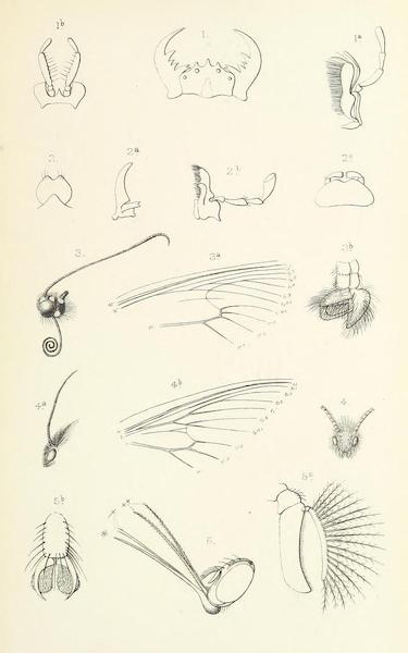 Matabele Land and the Victoria Falls - [Insect Parts] (1881)