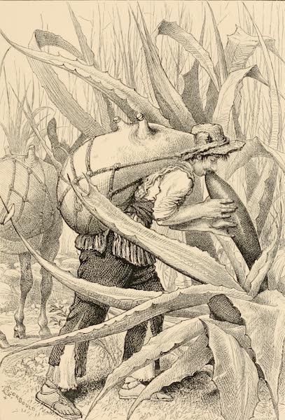Mexico To-Day - Pulque Tlachiquero (1883)
