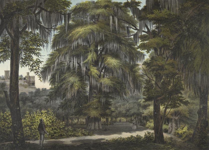 Mexico y sus Alrededories - Bosque de Chapultepec (1869)