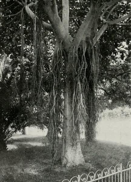 Monaco and Monte Carlo - The Indiarubber-tree's Example of Filial Duty [I] (1912)
