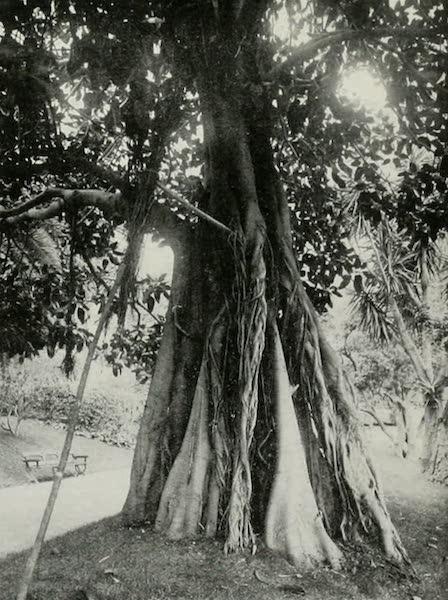 Monaco and Monte Carlo - The Indiarubber-tree's Example of Filial Duty [II] (1912)