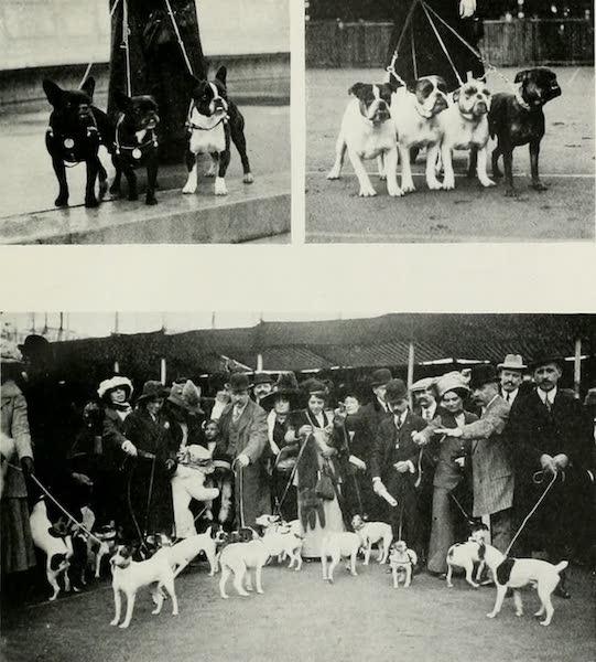 Monaco and Monte Carlo - The Dog Show (1912)