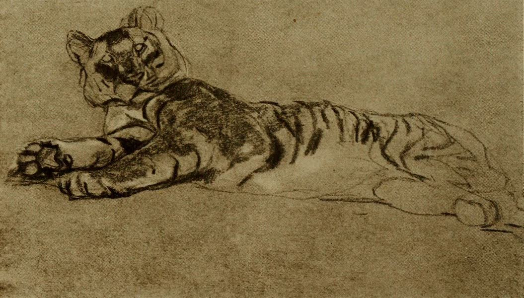 More Wanderings in London - Study of a Tiger. J.M. Swan (Guildhall) (1916)