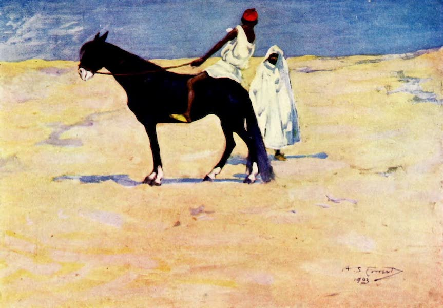 Morocco, Painted and Described - An Arab Steed (1904)