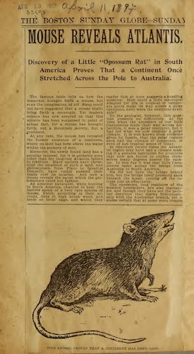 Natural History - Mouse Reveals Atlantis