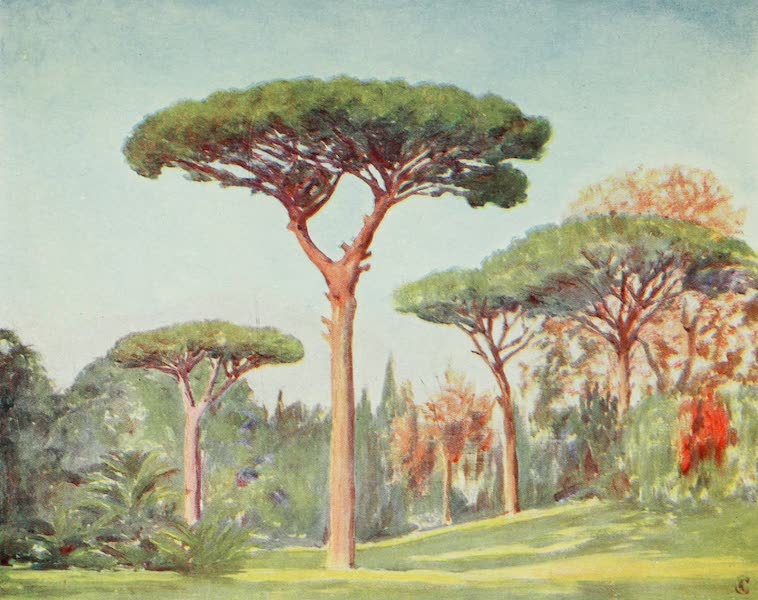 Naples, Painted and Described - Rock Pines in the Grounds of the Villa Floridiana, on the Vomero, Naples (1904)