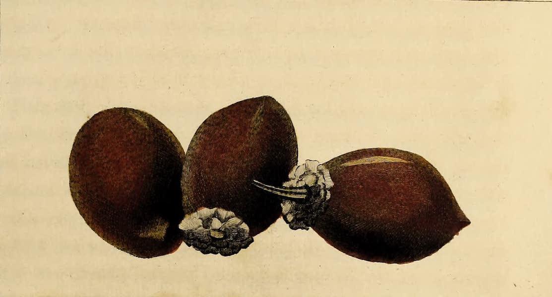 The Fruit called Avoira