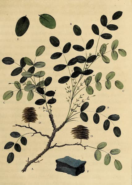 Sprig of the Indigo Plant