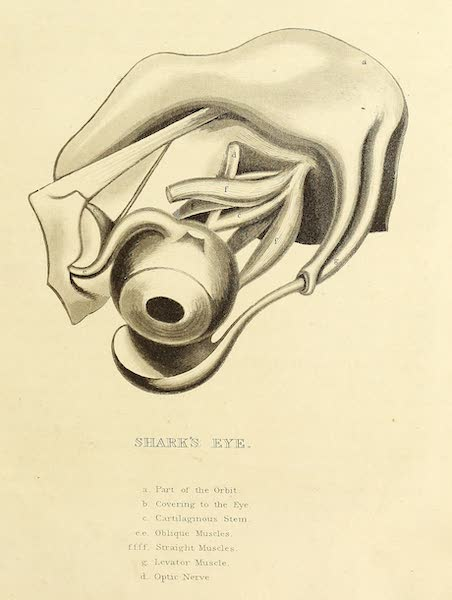 Narrative of a Journey in the Interior of China - Shark's Eye (1818)