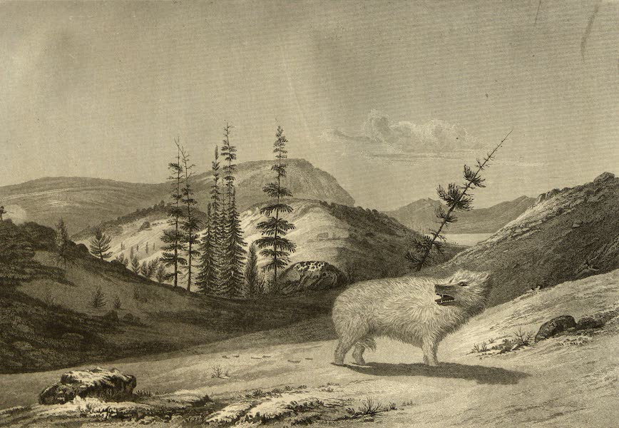 Narrative of a Journey to the Shores of the Polar Sea - The White Wolf and a View of the Dog Rib Rock (1823)