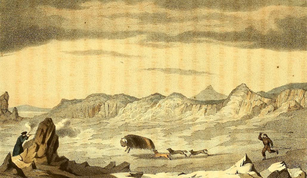 Narrative of a Second Voyage in Search of a North-West Passage Vol. 1 - Umingmak Command, J.C. Ross Killing a Musk-Bull (1835)