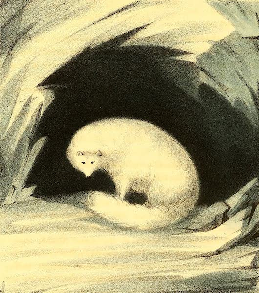 Narrative of a Second Voyage in Search of a North-West Passage Vol. 2 - Arctic Fox (1835)