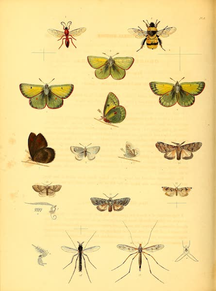 Narrative of a Second Voyage in Search of a North-West Passage Vol. 2 - Arctic Insects (1835)