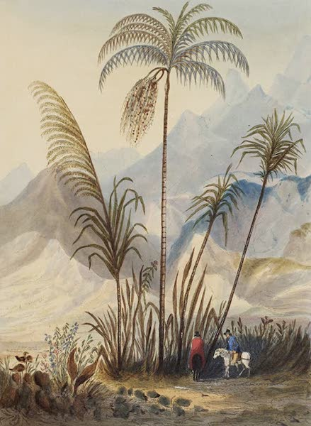 Narratives of South America - Tolyma (1836)